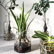 HK Living | Rooted phalaenopsis orchid vase | House of Orange Melbourne