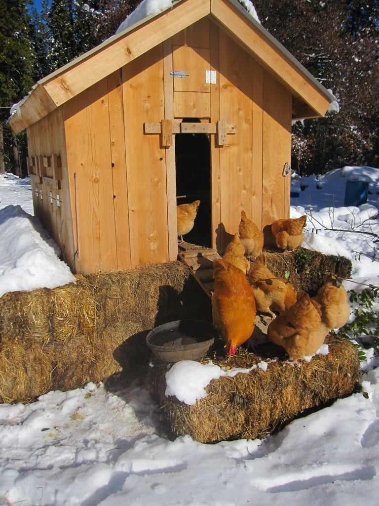 Wooden coop with several brown hens and snow all around