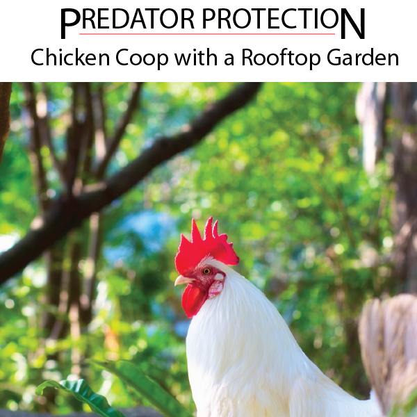 Predator Protection - Chicken Coop with a Rooftop Garden
