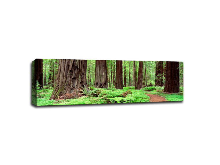 A unique gallery wrapped canvas with national park scenery