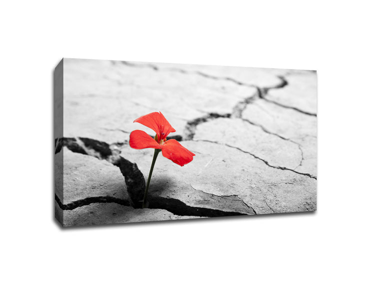 Flower from Cracks of The Earth Touch of Color Canvas