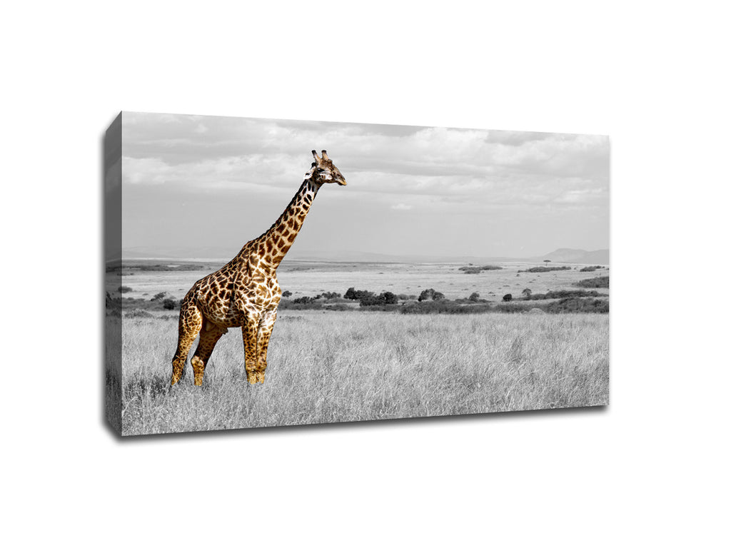 Giraffe in The Field Touch of Color Canvas