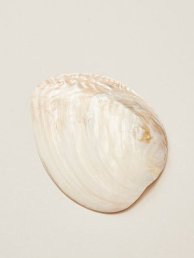 Cleansing Shell Plate-Home Decor-Ametsuchi