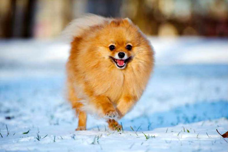 Winter Weather Tips For Your Dog
