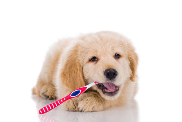 Oral Care for Dogs: How to Keep Your Dog's Teeth Clean