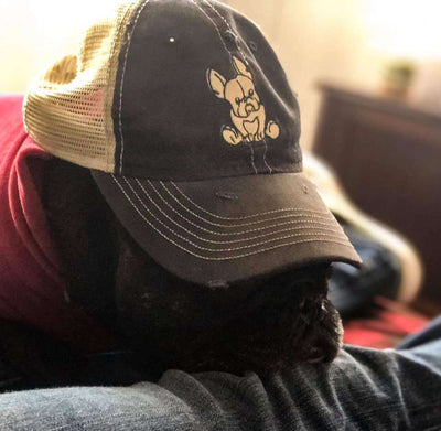 french bulldog on trucker hat