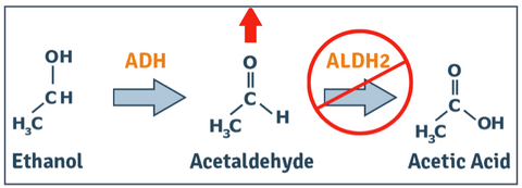 Acetaldehyde Metabolism with ALDH2 Deficiency