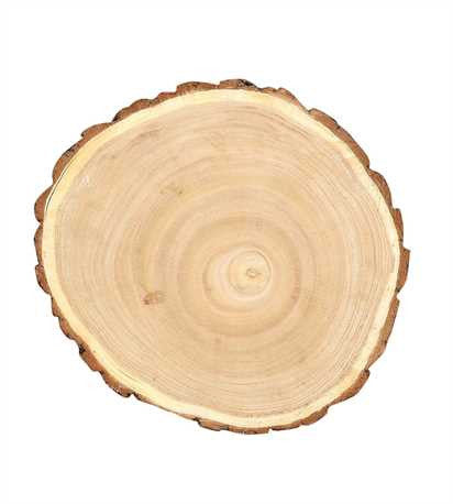 Medium Round Paulownia Wood Slice