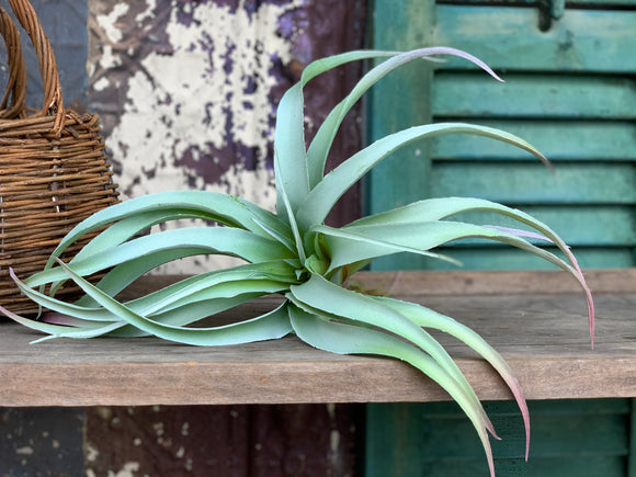 Large Faux Tillandsia Air Plant