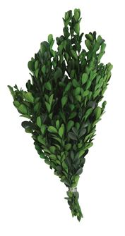 Preserved Boxwood Bundle