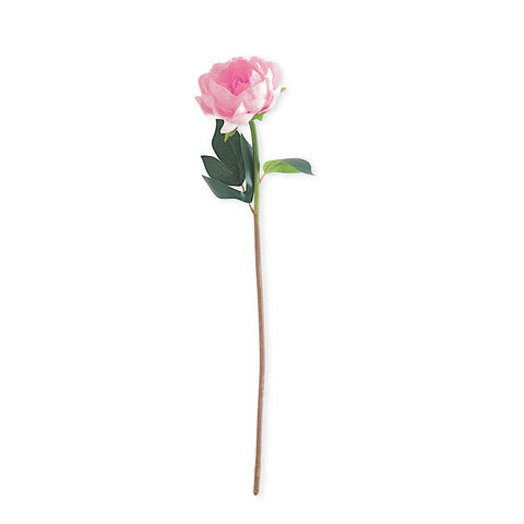 Single Peony Stem