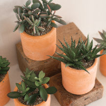 Terracotta Potted Artificial Succulent