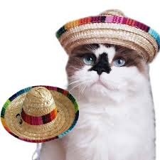 Funny Cat and Small Dog Sombrero