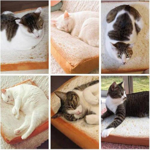 Funny Toast Design Cat Bed or Dog Beds by Blissfactory Pet Supplies