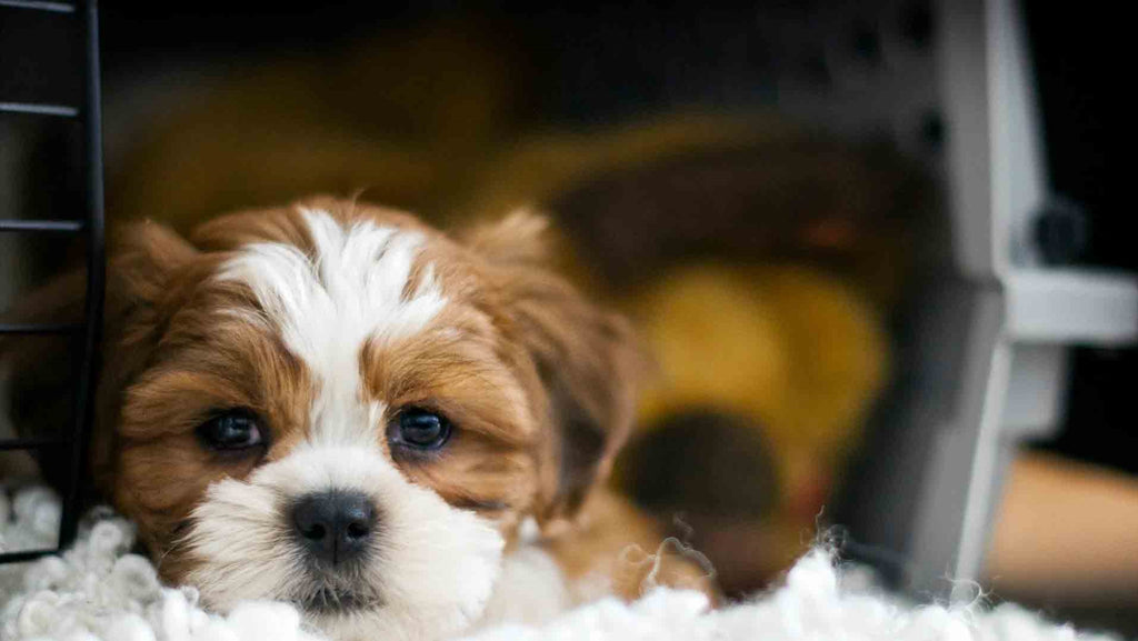 New Puppy……..Crate Training………Sleepless Nights