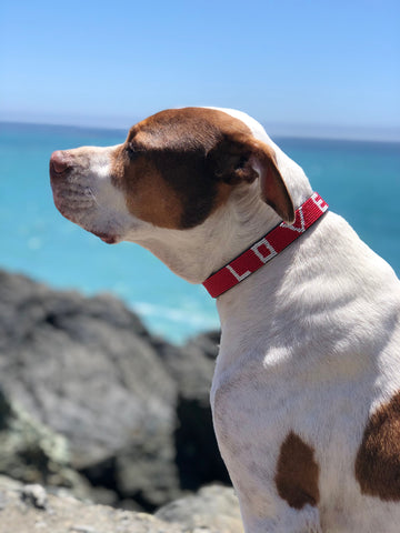 Love Is Project dog collars - Oprah's Favorite Things