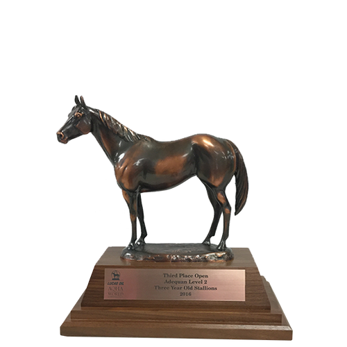 AQHA Level 2 Third Place Bronze Duplicate Trophy (R)