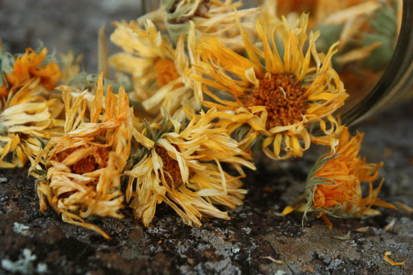 organic-calendula-flowers-natural-eczema-remedy