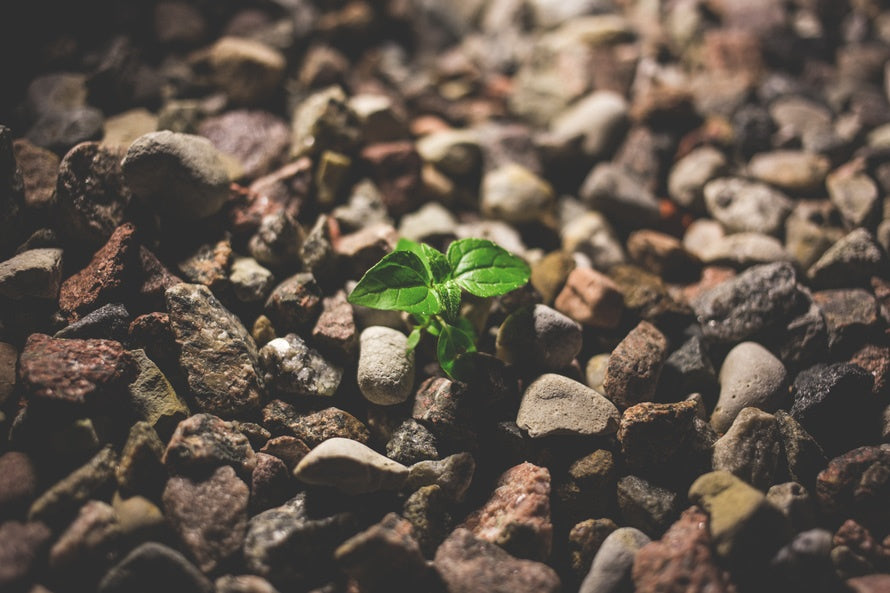 green-leaf-growing-out-of-gravel