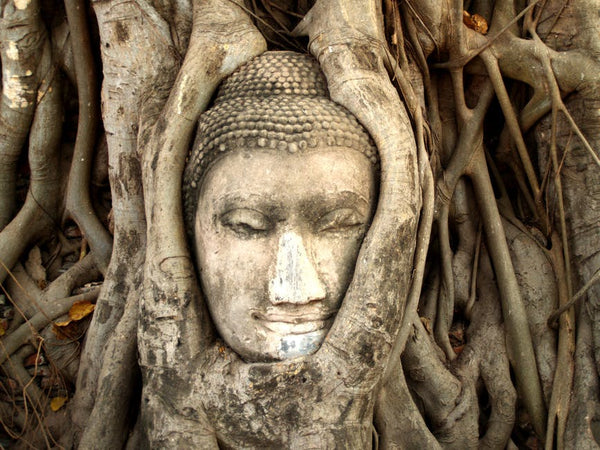 buddha-tree-art-asia-spiritual-how-to-meditate