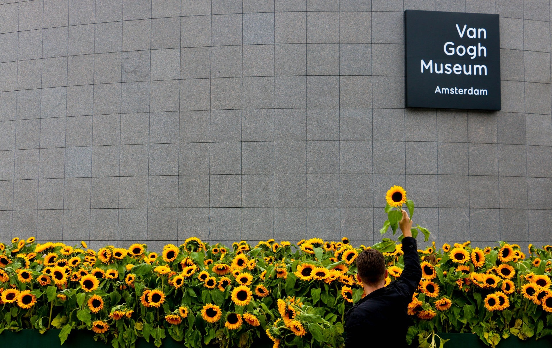 Sunflowers outside the Van Gogh Museum