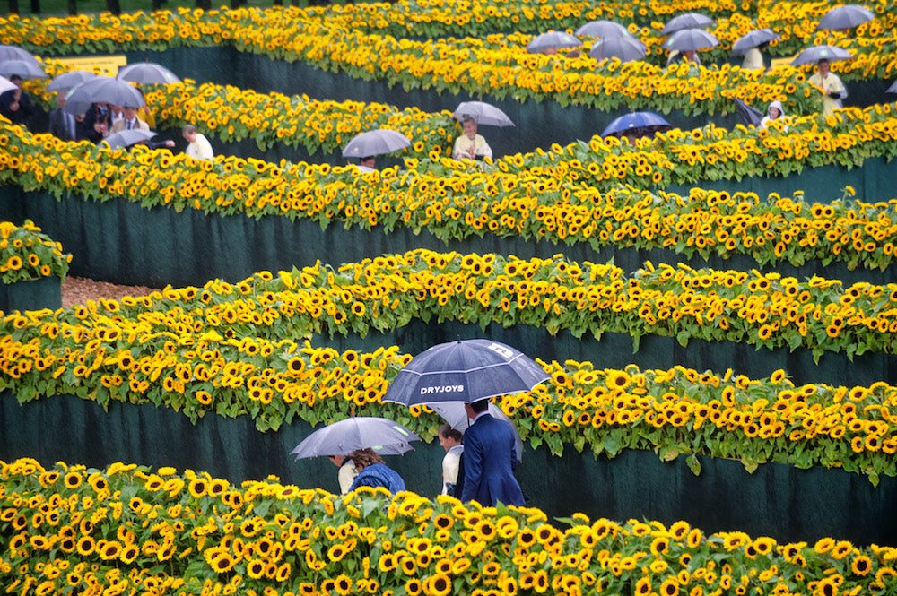 Sunflowers maze at the Van Gogh Museum
