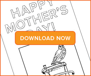 The Goldfinch Mother's Day Card