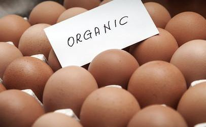 Organic Free Range Chicken Eggs