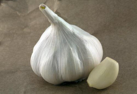 Organic German Extra Hardy Garlic