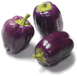 Organic Purple Beauty Sweet Pepper