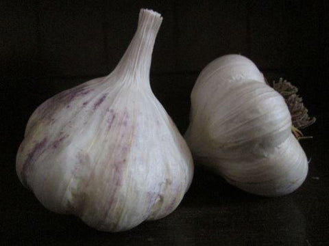 Organic China Dawn Garlic