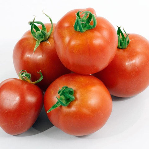 Organic Early Red Chief Slicer Tomato