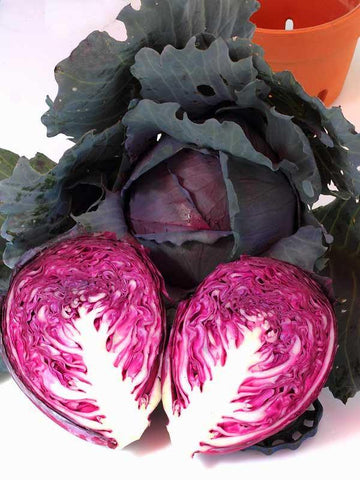 Organic Red Acres Cabbage