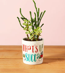 What's Up Succa Mini Planter