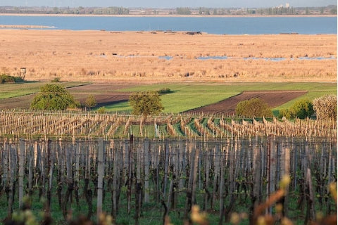 Burgenland vineyards next to Neusiedlersee in Southern Austria