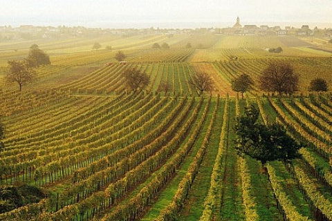 Vineyards outside Rust in Austria - Austrian wine regions of Wachau, Kremstal, Kamptal, Burgenland, Styria, Weinviertel, Niederosterreich