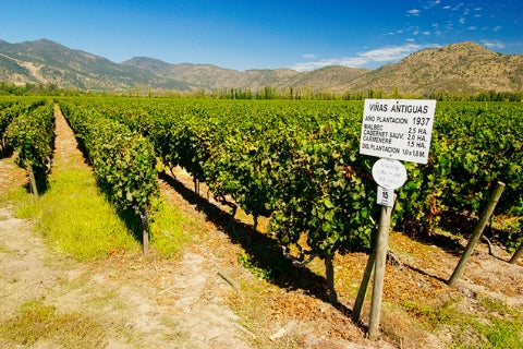 Chile wine regions - Central Valley region, Maipo Valley