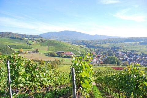 Weingut Buchin vineyards in Markgraflersland, Germany