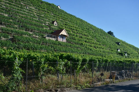 Weingut Johannes Bauerle vineyards in Germany