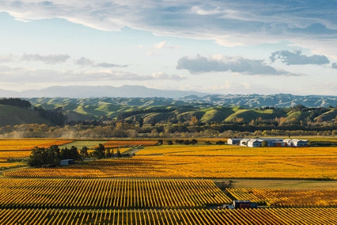 New Zealand North Island wine regions - Gimblett Gravels - Riesling, Pinot Gris, Pinot Noir