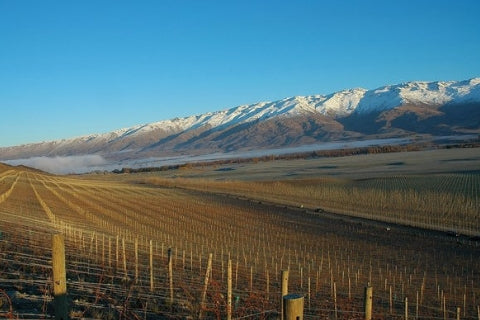 Bendigo vineyards of Quartz Reef in Central Otago, New Zealand - Pinot Noir