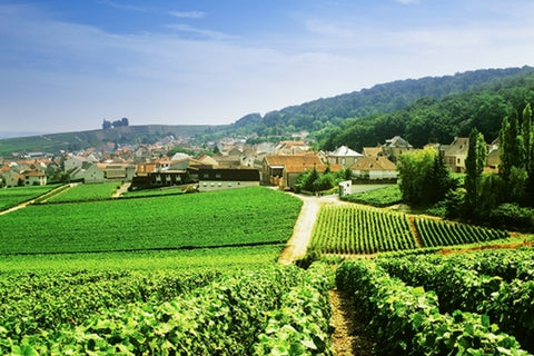 Champagne sparkling wine region, norther France - Chardonnay, Pinot Noir, Pinot Meunier - Grower Champagne