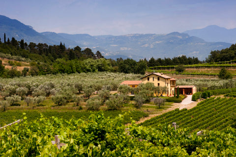 Get To Know Northern Italy's Wine Regions @ Winebubble