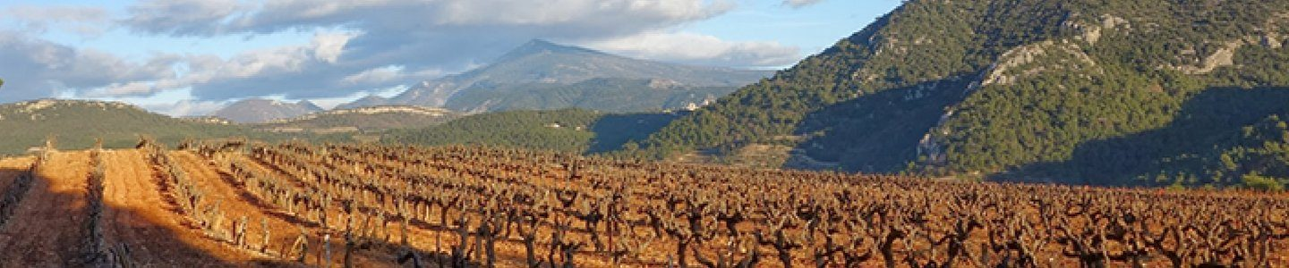 Rhone wine - France - red wine - Chateauneuf-du-Pape, Hermitage, Cotes du Rhone, Clairette