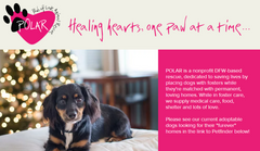 Give10Back Charity of the Month - Paws of Love