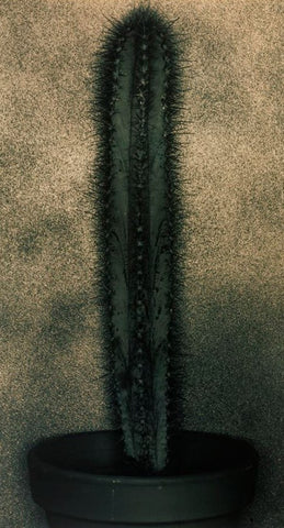 Cactus Series - Alex Buckingham Photography