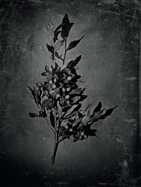 Flora - Alex Buckingham Photography