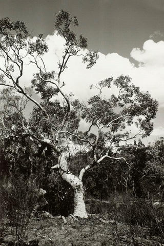 Girraween - Alex Buckingham Photography