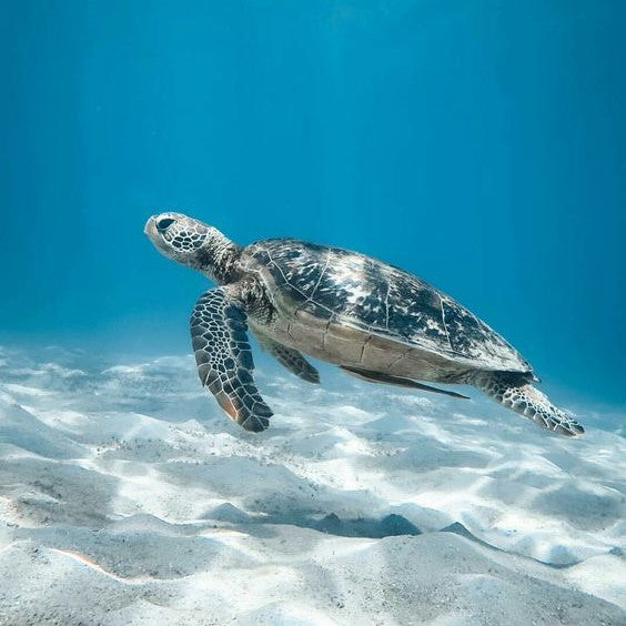Protect Our Oceans & Save Our Sea Turtles