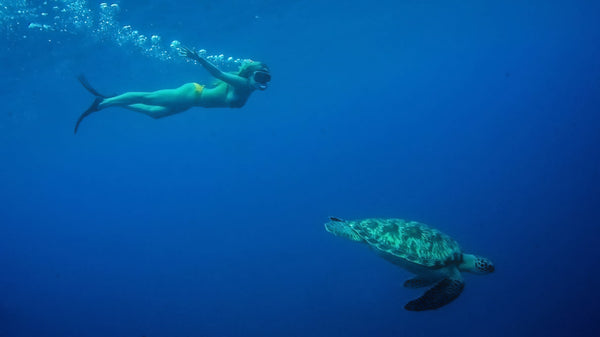 PIYOGA Sea Turtles